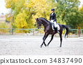 equestrian, lady, horsemanship 34837490