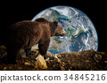 Brown bear on Earth background 34845216
