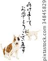 牛頭梗 牛頭狗 雜種犬的一種 34845829