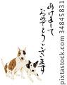 牛頭梗 牛頭狗 雜種犬的一種 34845831