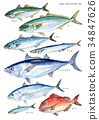 blue fish, illustration, llustration 34847626