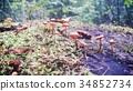 蘑菇 34852734