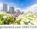 วิวเมือง,ท้องฟ้าเป็นสีฟ้า,ดอกไม้ 34857159