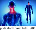 3D illustration of Cervical Spine, medical concept 34858481
