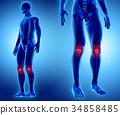 3D illustration of Patella, medical concept. 34858485