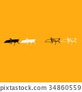 昆蟲 蚱蜢 向量 34860559