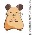 倉鼠 34862985