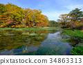 八甲田 濕地 沼澤 34863313