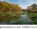 八甲田 濕地 沼澤 34863314