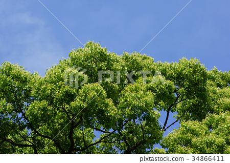 장목 녹나무 꽃말은 「향수」 34866411