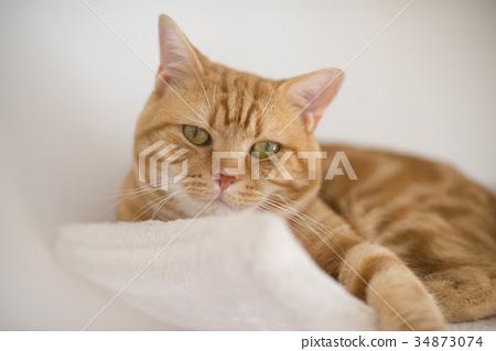 毛孩 貓 貓咪 34873074