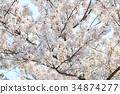 spring sakura pink flower 34874277