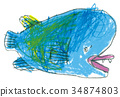 拿破崙魚 34874803
