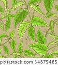植物 草本的 香草 34875465
