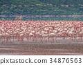 肯尼亞 鳥兒 鳥 34876563