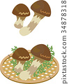 主編濾網 秋之美食 松茸蘑菇 34878318