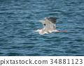 wild, bird, animal 34881123