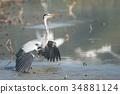 wild, bird, animal 34881124