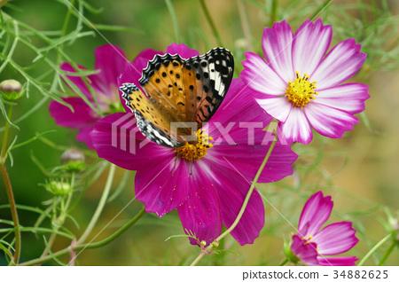 停止作為宇宙飛蛾的蝴蝶 34882625