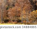 ต้นเมเปิล,ทัศนียภาพ,ภูมิทัศน์ 34884865