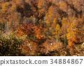 ต้นเมเปิล,ทัศนียภาพ,ภูมิทัศน์ 34884867
