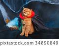 Cat vampire on black background. Halloween theme. 34890849