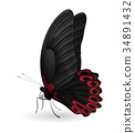 Beautiful butterfly isolated on a white background 34891432