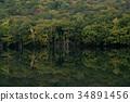 ป่า,ผิวน้ำ,ธรรมชาติ 34891456