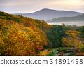 ฤดูใบไม้ร่วง,ต้นไม้,ธรรมชาติ 34891458