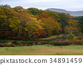 ฤดูใบไม้ร่วง,ต้นไม้,ธรรมชาติ 34891459