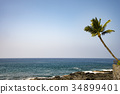 Coconut palm trees and the sea on the island of Hawaii 34899401