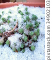 冬天 冬 下雪 34902103
