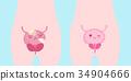 解剖学 身体 卡通 34904666
