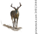 Male Deer watercolor 34913444