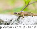 Cana snake 34918734