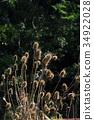 화수, 수상꽃차례, 수상화 34922028