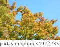 잎, 느티, 나무 34922235