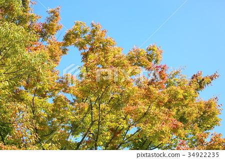 가을, 단풍, 느티나무 34922235