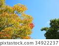 잎, 느티, 나무 34922237