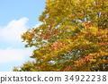 잎, 느티, 나무 34922238
