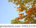 잎, 느티, 나무 34922239