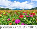 백일초, 백일홍, 푸른 하늘 34929815