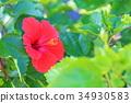 花朵 花 花卉 34930583