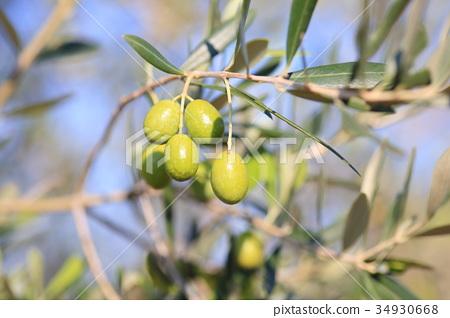 橄欖果 34930668