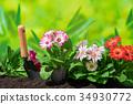 从事园艺的大丁草花 34930772