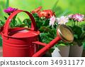Gardening Red Jouro and Gerbera flowers 34931177