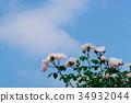 bloom, blossom, blossoms 34932044
