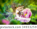 White unicorn with butterfly wings on poppy flower 34933259