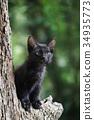小猫在树上(黑猫) 34935773