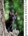 小猫在树上(黑猫) 34935774